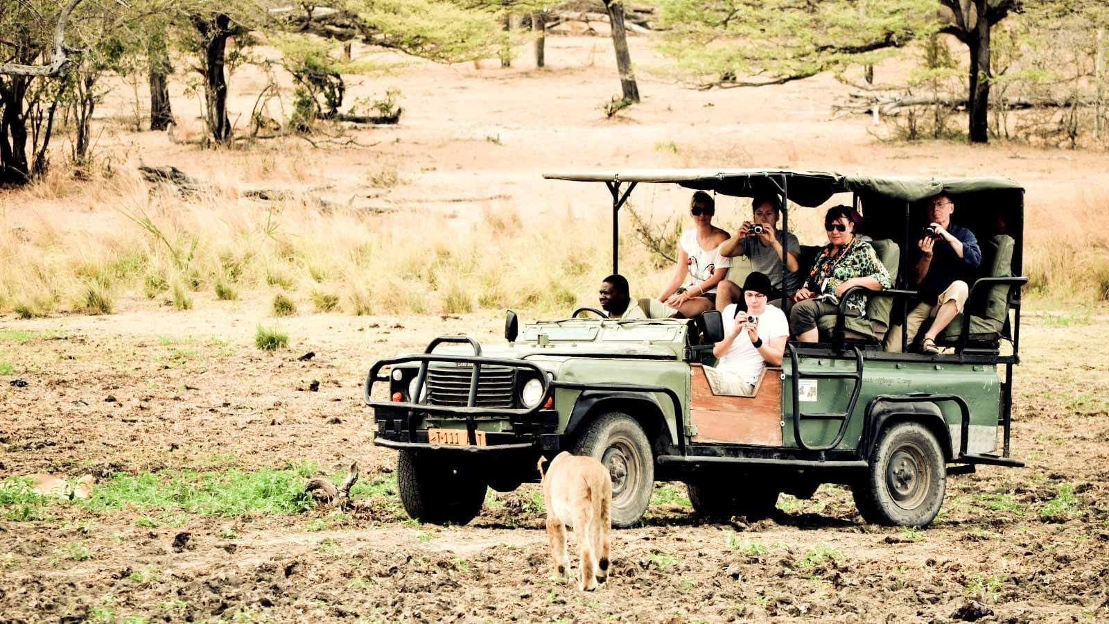 Medidas de seguridad en un safari